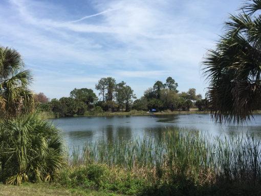Lake Osprey