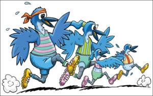 scrub-jay-race